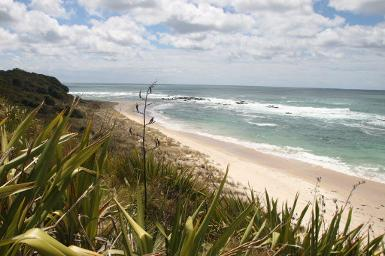 Fish Far North discount: 20% off fishing in New Zealand