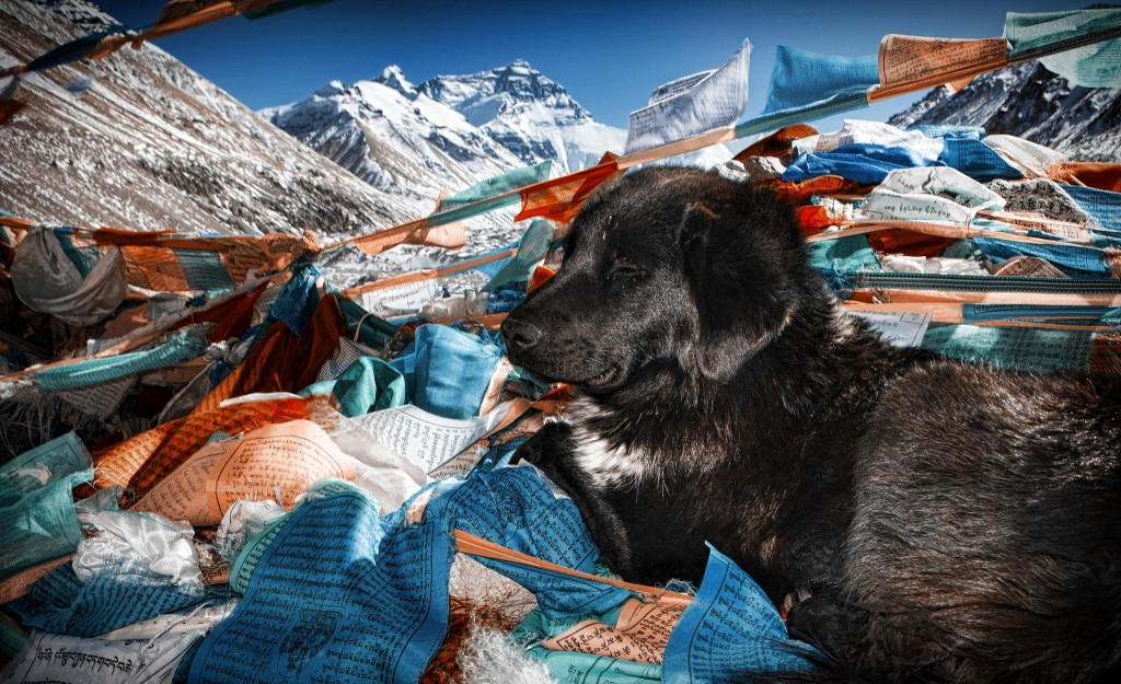 Iconic treks in asia everest base camp Flickr image by Christopher Michel