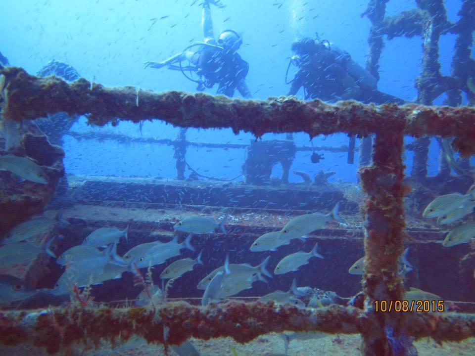 Turtle Dive Center discount: Scuba Diving in Dominican Republic