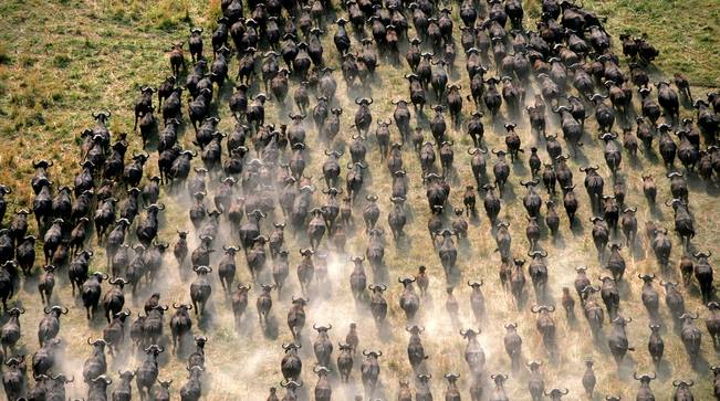 Guide to Tanzania National Parks image courtesy of Ecological Adventure