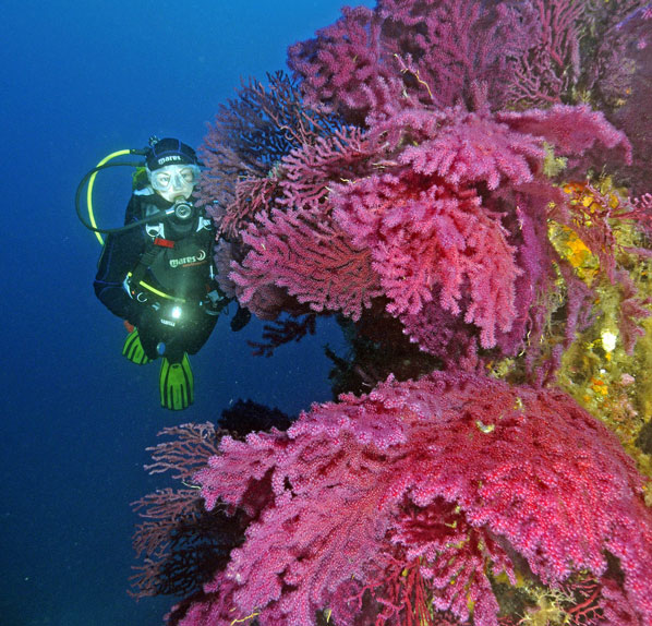 Mare Nostrum Diving discount: 20% off Ustica scuba diving in Italy