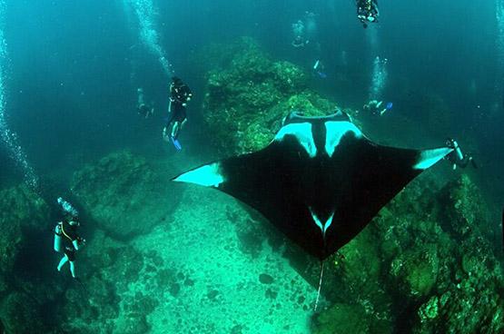 10 best Phuket dive sites: Top Thai scuba diving holidays - koh bon manta ray