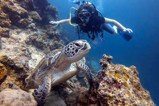 Guide to Phuket scuba diving holidays in Thailand - koh racha noi turtle