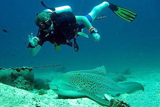 Guide to Phuket scuba diving holidays in Thailand - shark point leopard shark
