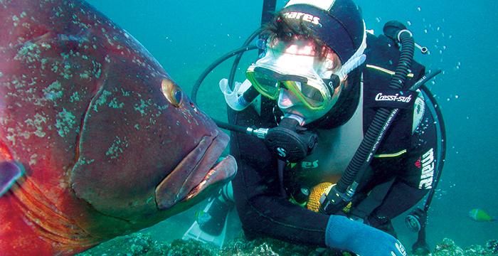 Scuba Diving Madeira adventure holidays: 10 best Madeiran activities (C) Madeira Regional Tourism Board
