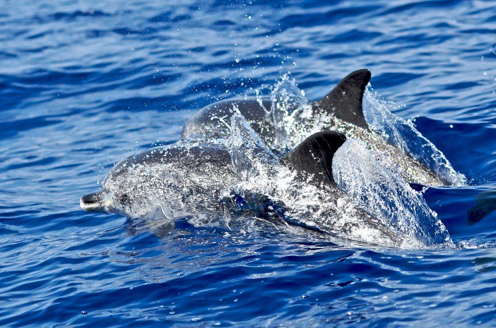Marine safari Madeira adventure holidays: 10 best Madeiran activities flickr image by liber