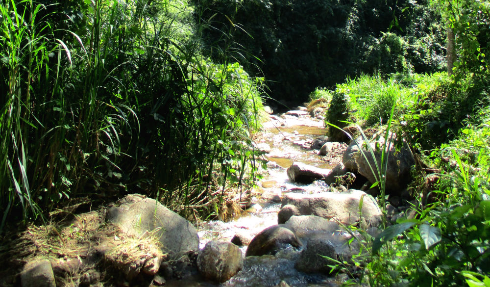 Review of Active Thailand trekking holiday in Chiang Dao mountains 7