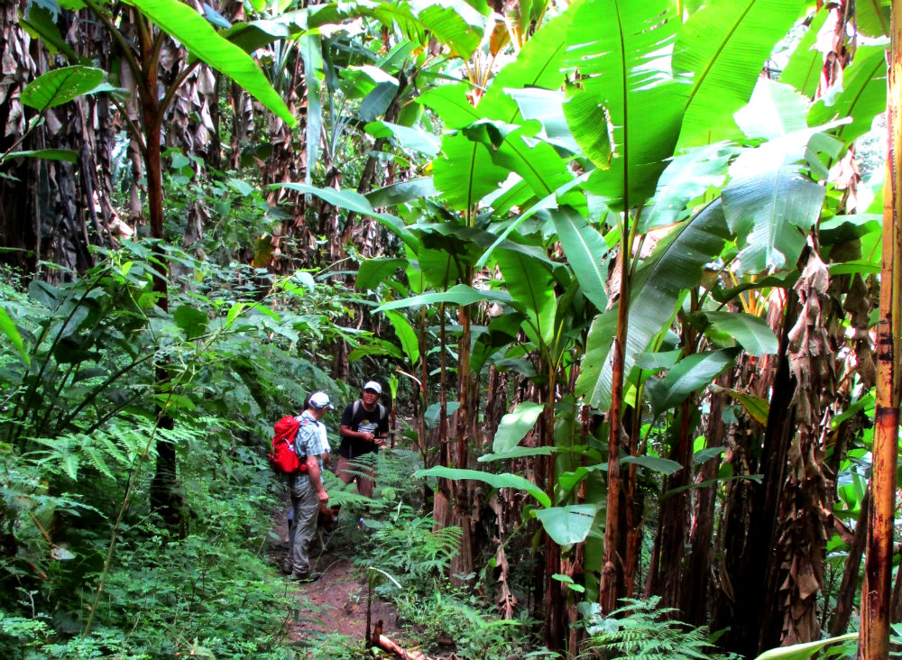 Review of Active Thailand trekking holiday in Chiang Dao mountains