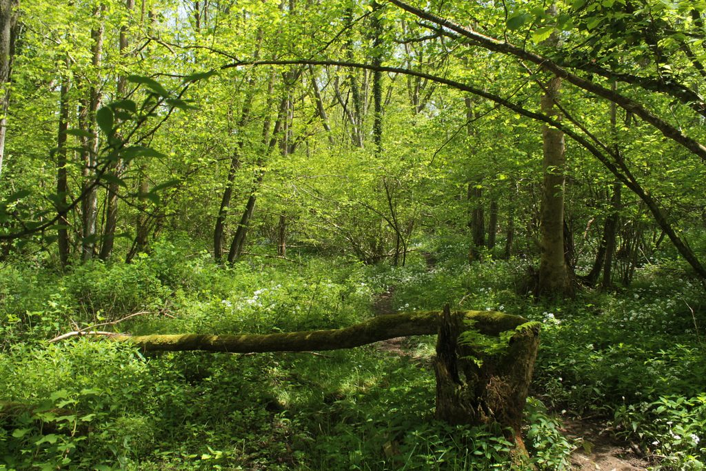 Sussex woodland Learn how to survive flickr image by Henry Hemming