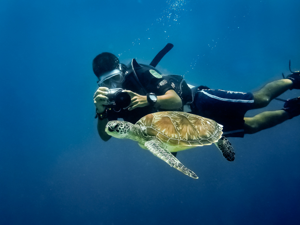 Guide to the best Malaysian scuba diving in Sipadan Flickr CC image of turtle by wwarby