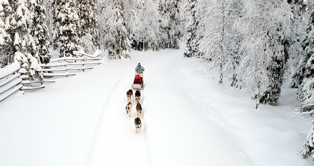 dogsledding Christmas in Lapland Review of Ruka family adventure holiday