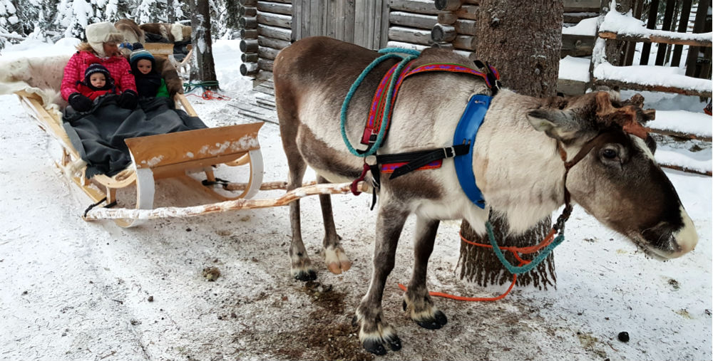 reindeer sled Christmas in Lapland Review of Ruka family adventure holiday