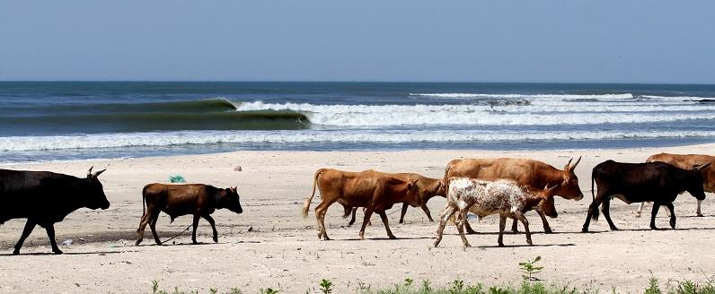 Review of Marejada surf camp Cap Skirring surfing holiday in Senegal