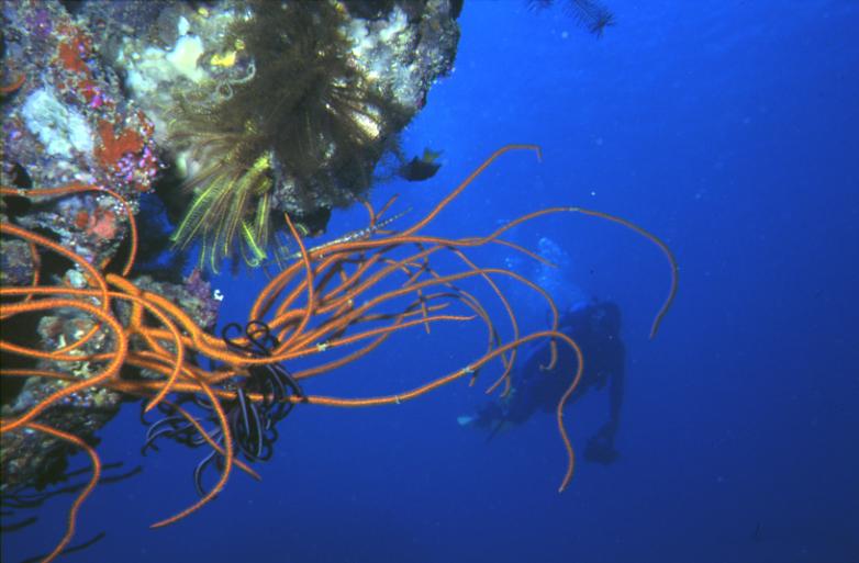 Planning a meaningful adventure Scuba dive and volunteer in fiji Flickr CC image by Derek Keats