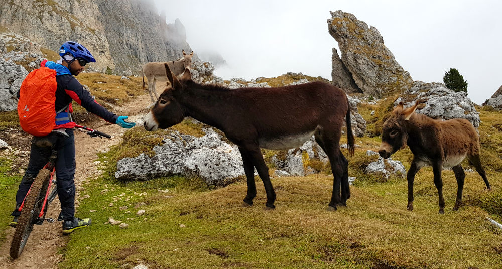 Review of Adler Dolomiti donkeys on Val Gardena MTB holiday in Ortisei