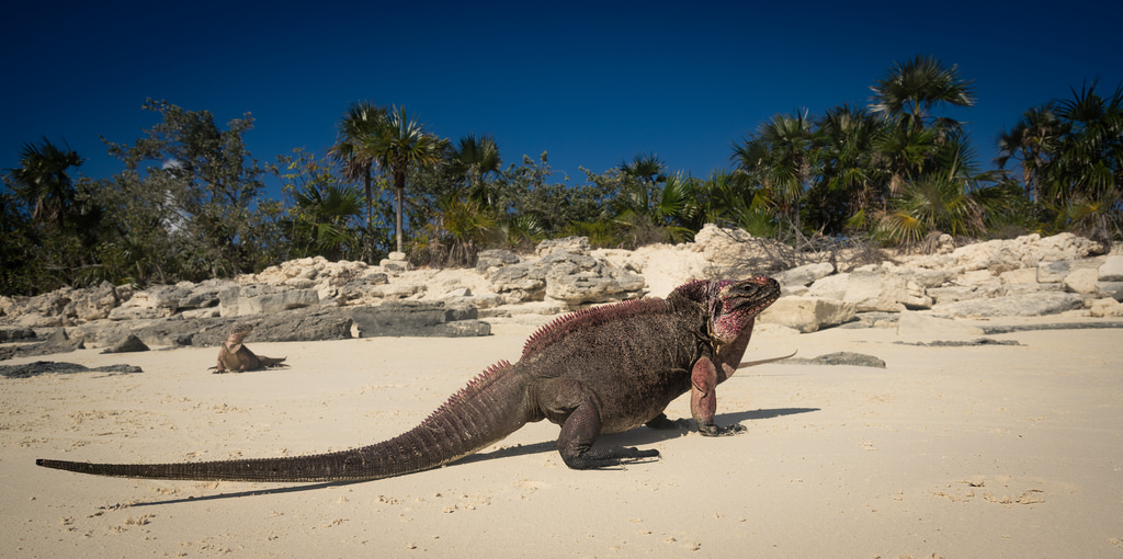 Bahamas adventure holidays the 17 best Exuma activities Flickr CC image by Kai Lehmann