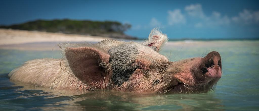Bahamas adventure holidays the best Exuma activities Flickr CC image by Kai Lehmann