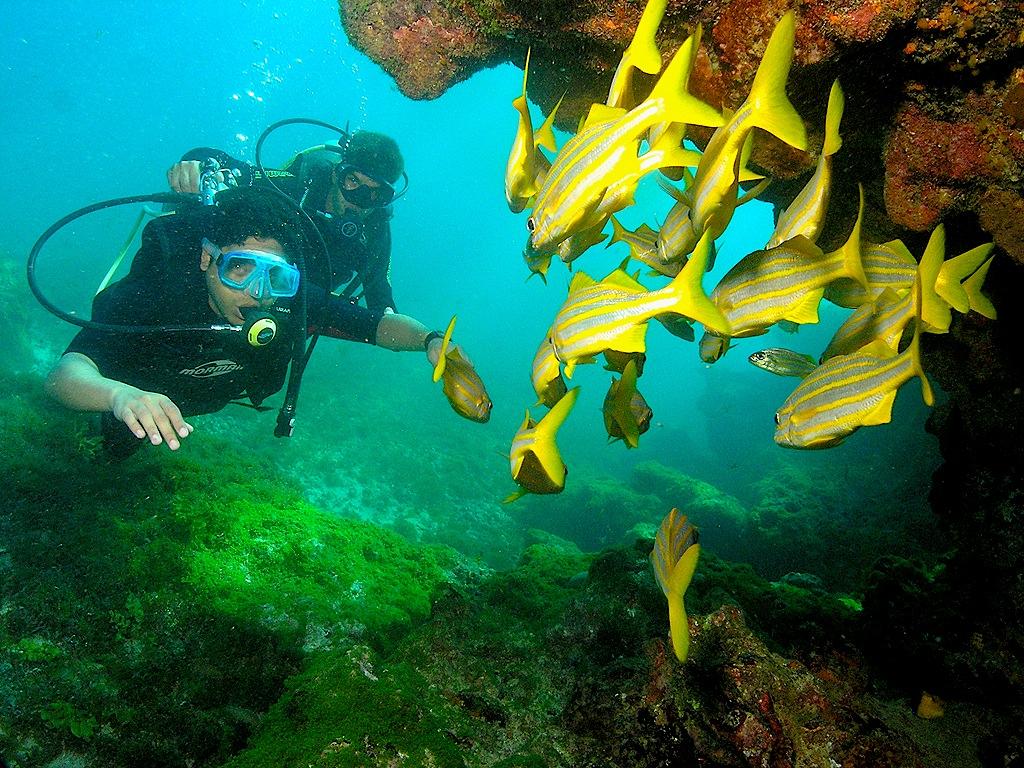 Best island adventures: Activities on Tripadvisor's top 10 islands diving Fernando de Noronha Flickr image in Brazil by Tadeu Pereira (Ted)