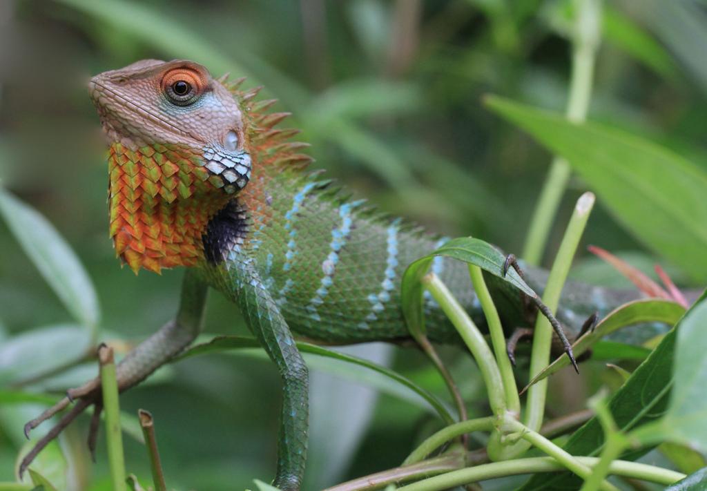 Indian safari adventure in Rajasthanvs Sri Lanka wildlife tours Flickr CC Image of Sri Lanka by Aries Tottle