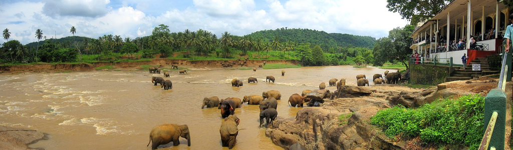 Indian safari adventure in Rajasthanvs Sri Lanka wildlife tours Flickr CC Image of Sri Lanka by ronsaunders47