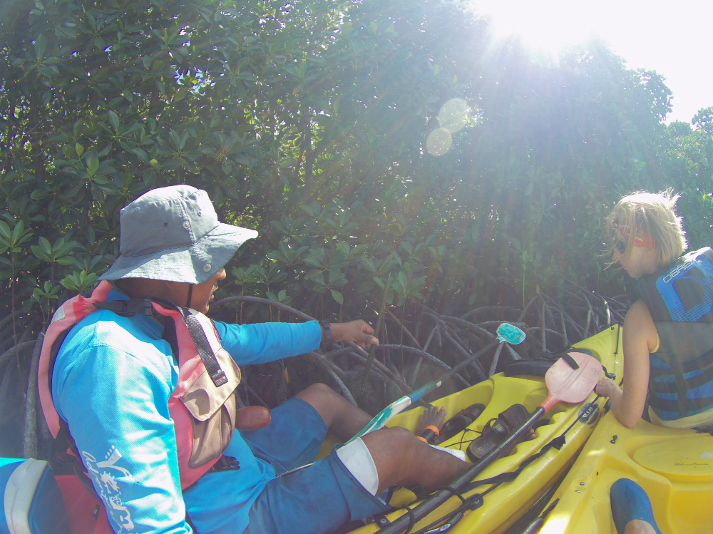 Kayaking on a Mauritius adventure and learning about mangroves
