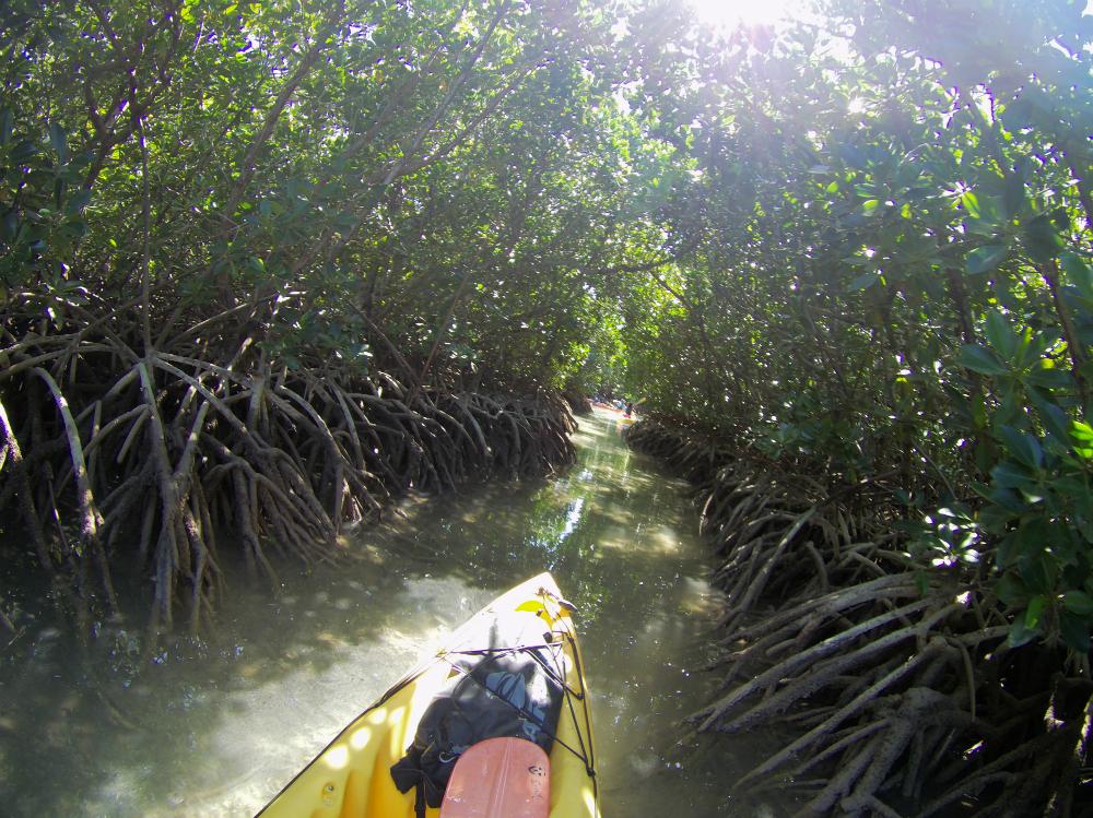 Kayaking through a tunnel of mangroves. Picture @Julia Horbaschk