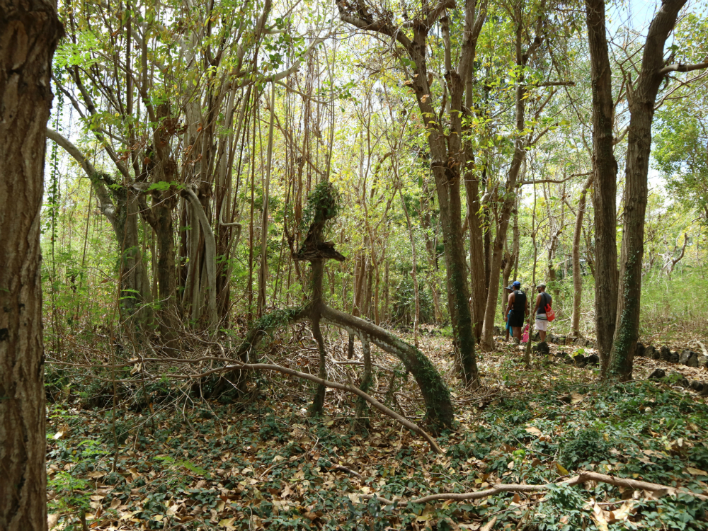 Mauritius adventure through the nature trail on Amber Island. Picture @Julia Horbaschk