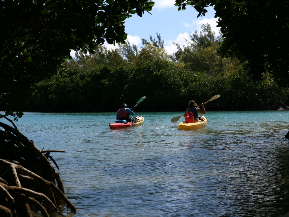 Sea kayaking to Amber island takes you through the mangrove forest. Picture @Julia Horbaschk