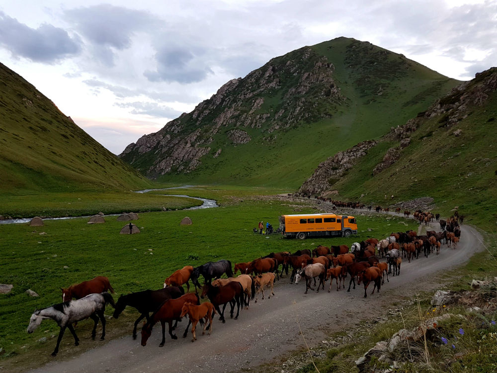 horse train and truck Image by Oasis Overland