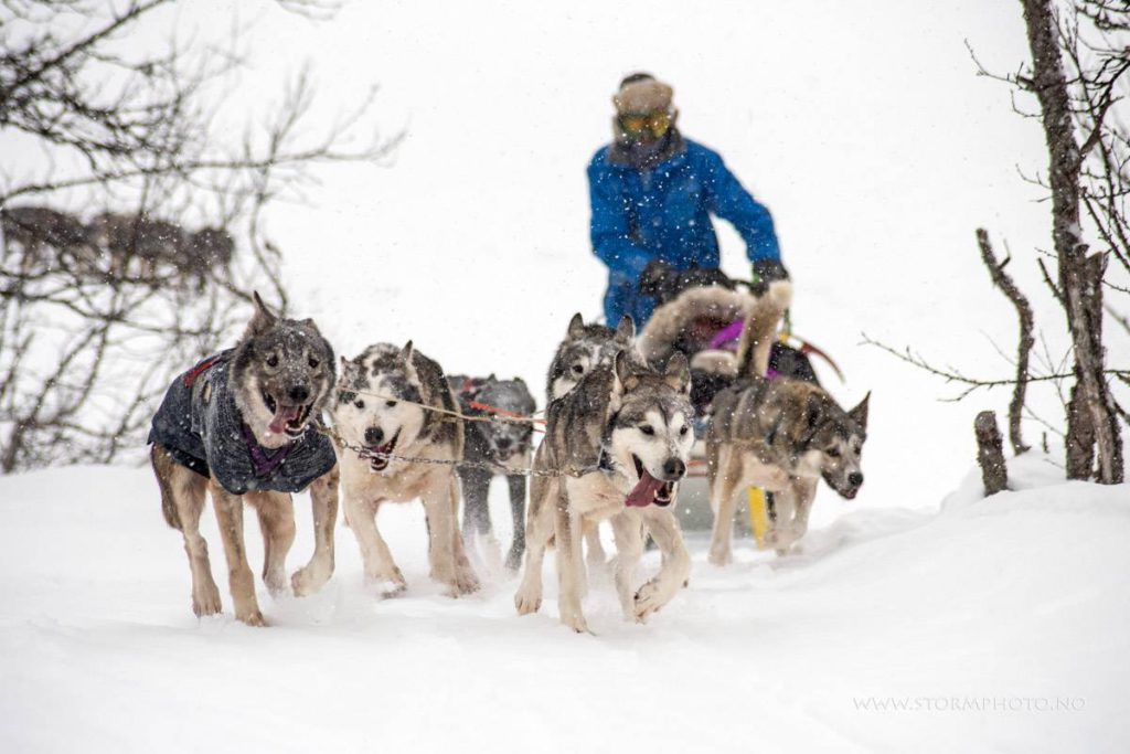 Dog sledding in Norway  by Undiscovered Mountains