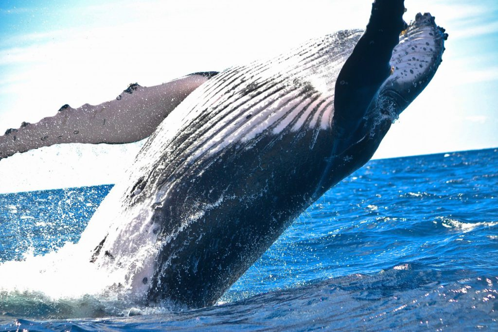 Best whale watching adventures 6 exciting whale trips worldwide royalty free image from pxhere