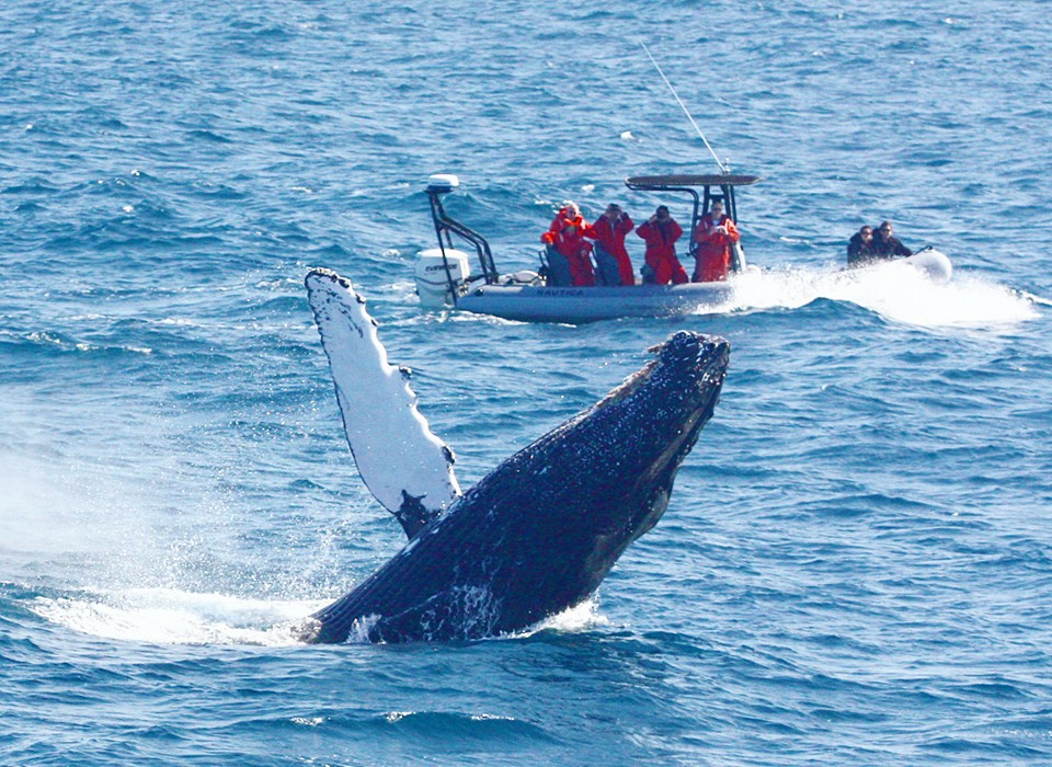 Rib whale watching in San Diego is one of the exciting whale trips worldwide Image courtesy of Adventure RIB Rides