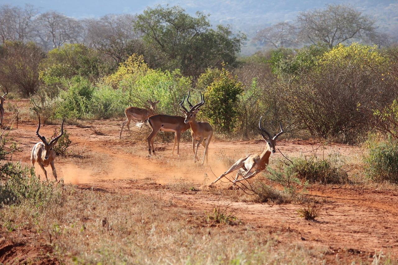 2 day Tsavo East National Park luxury safari in Kenya