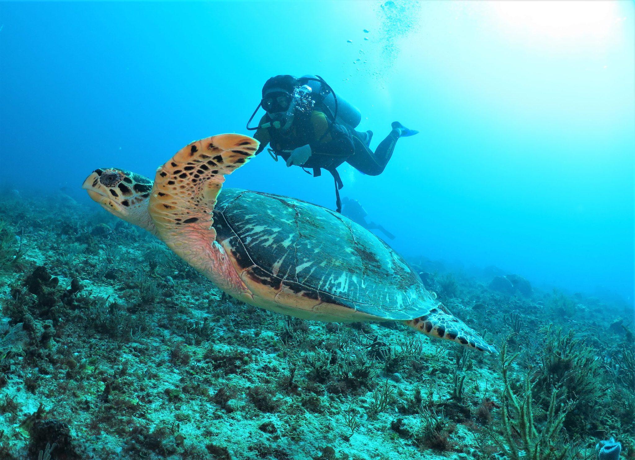 Playa del Carmen scuba diving experience: 2 dive day trip Mexico