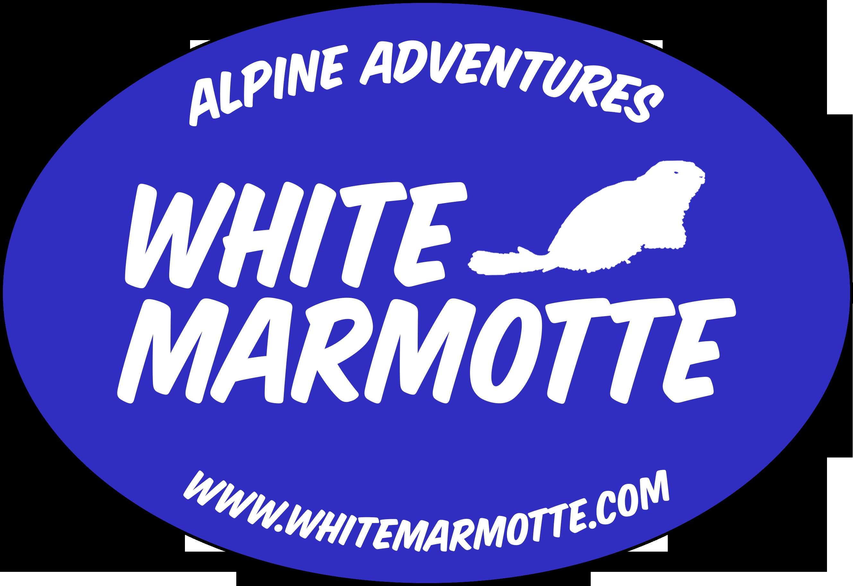 White Marmotte