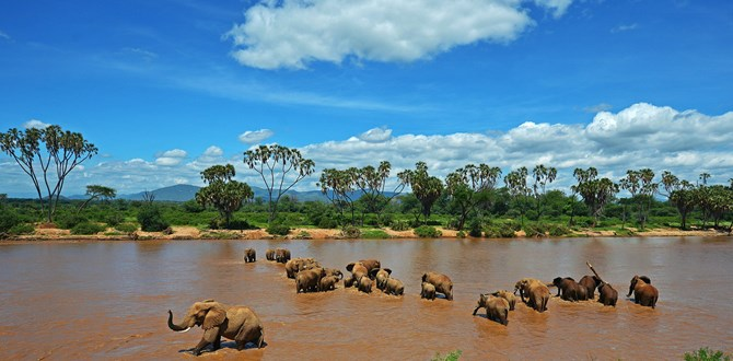 Explorer Kenya Tours and Travel Limited