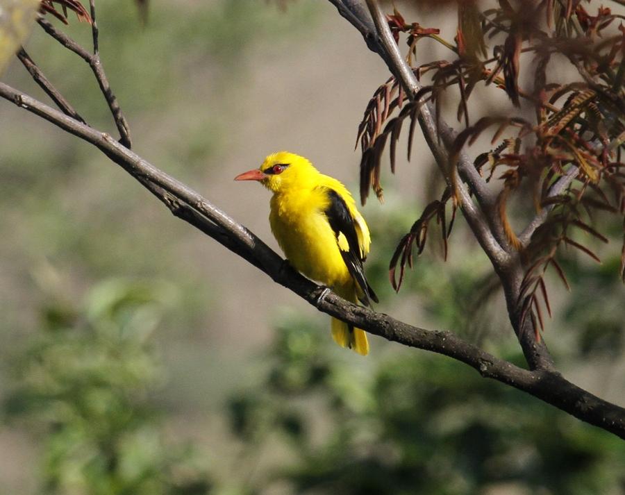 Godawari birdwatching experience in the Kathmandu Valley