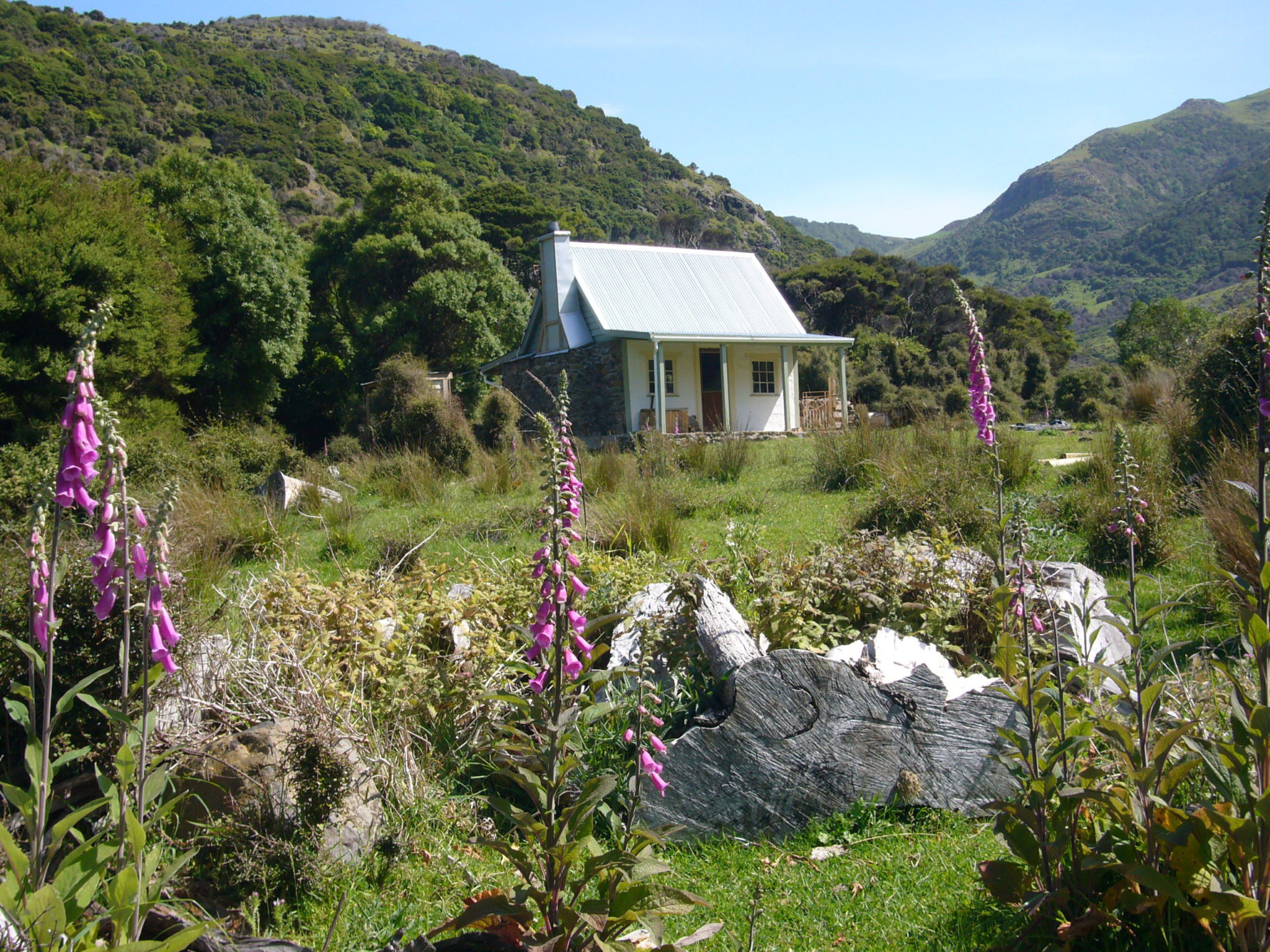 Pohatu Penguins accommodation: Overnight at NZ penguin colony