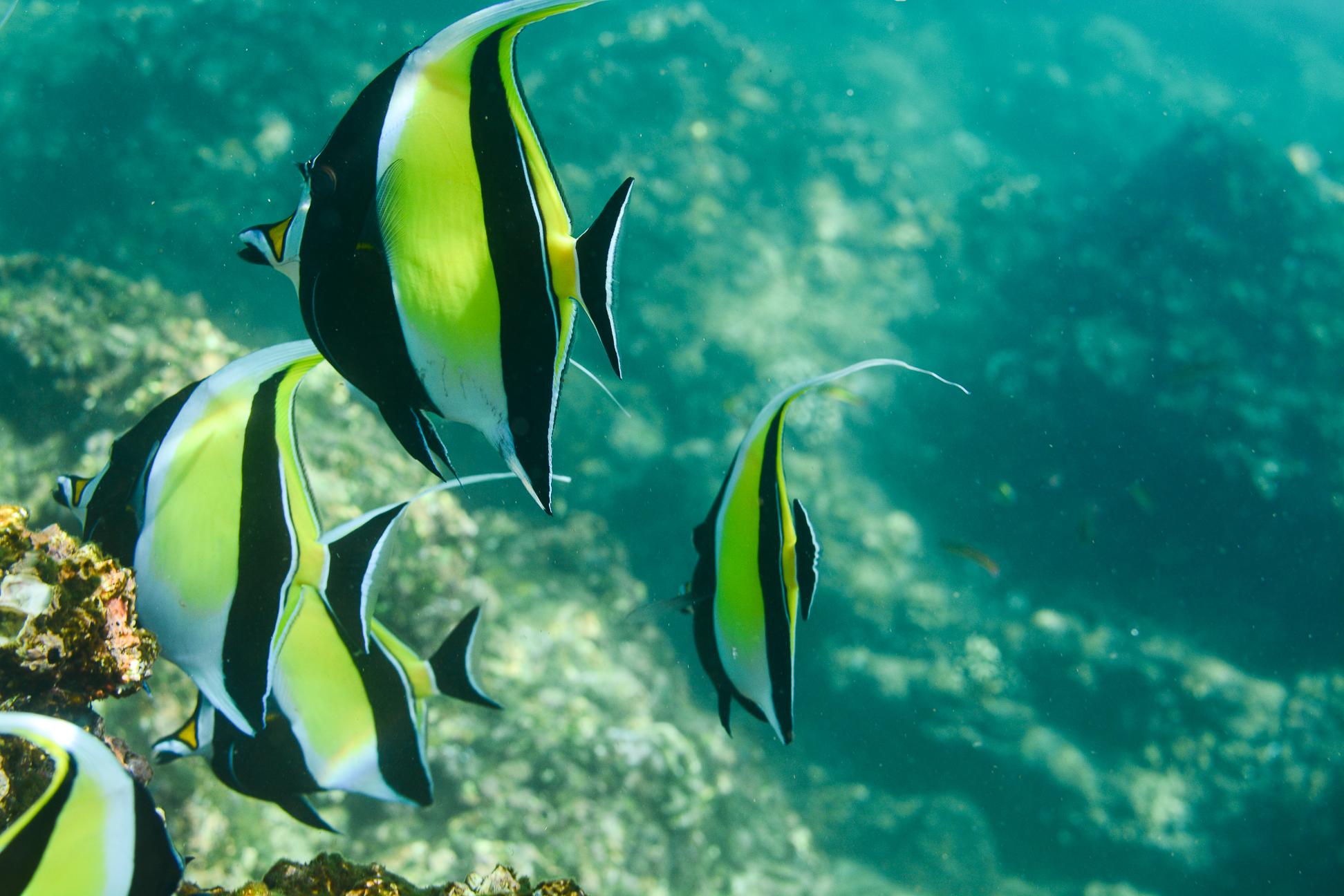 Private snorkeling tour to Chileno Bay and Santa Maria Cove