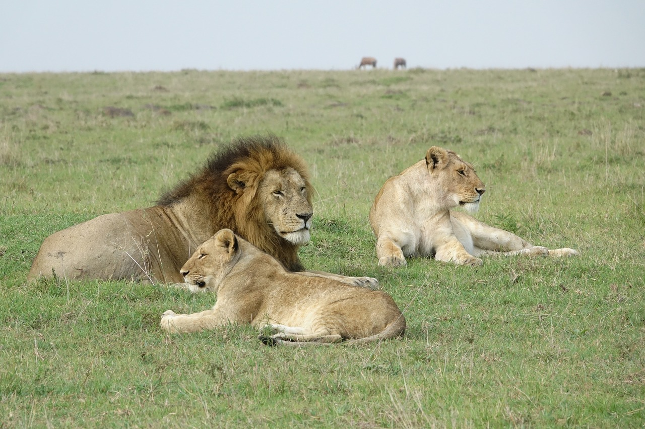 4 Days Kenya budget safari: See the Big 5!
