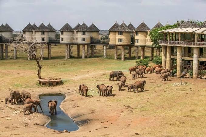 6 days Kenya Budget Safari at Amboseli and Masai Mara