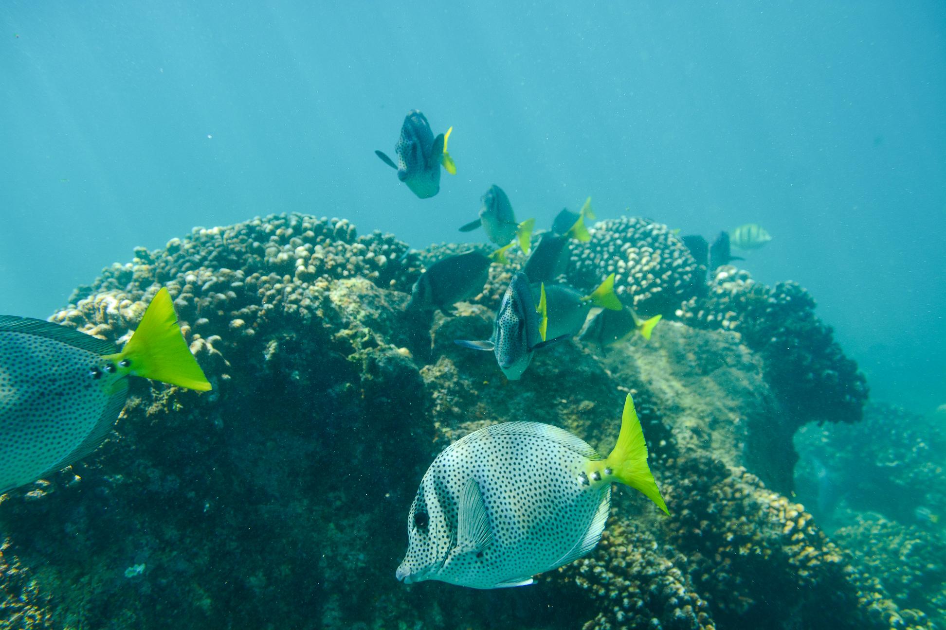 Chileno Bay and Santa Maria snorkeling experience in Mexico