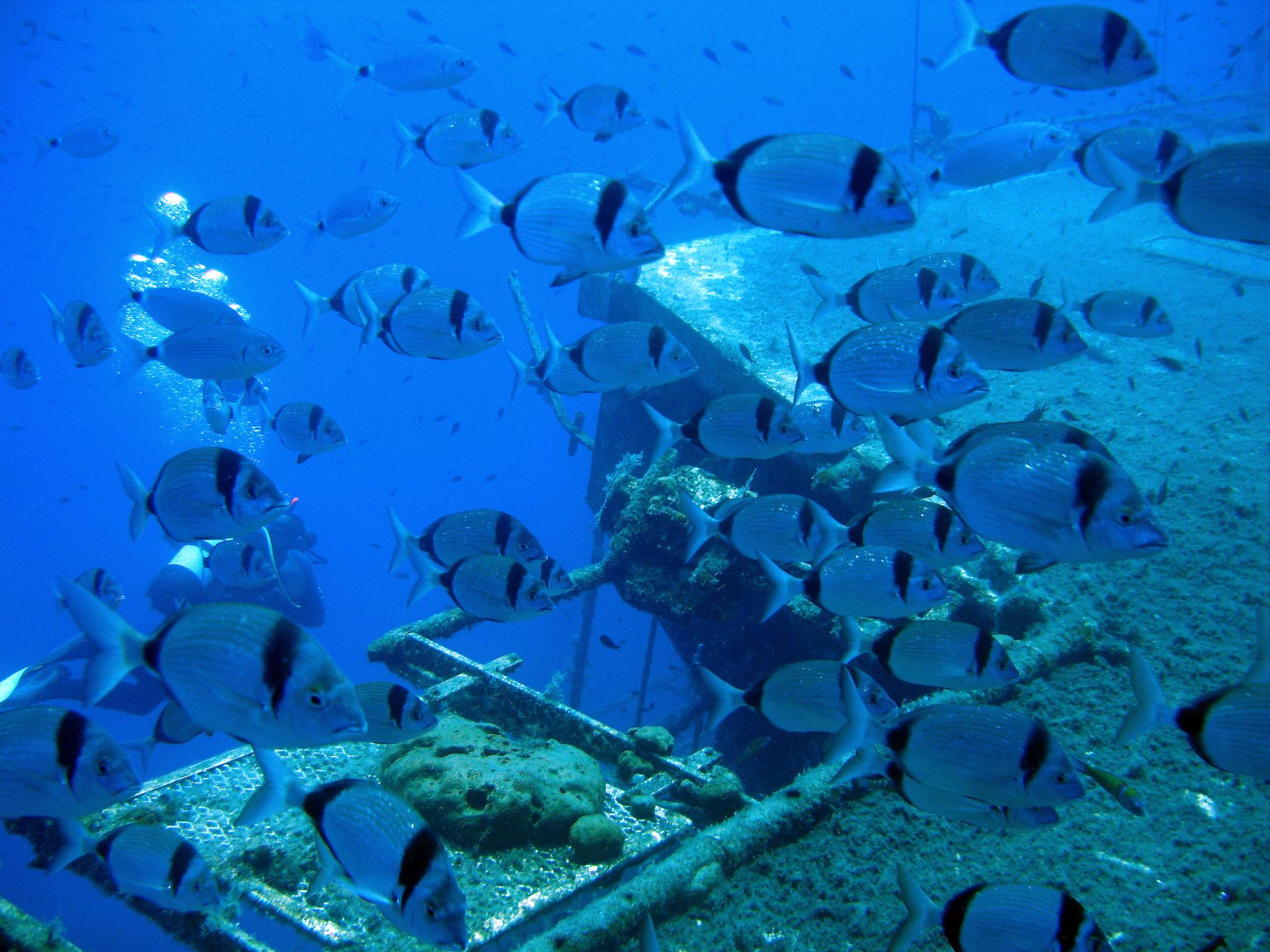 Double Paphos Scuba Diving Trip
