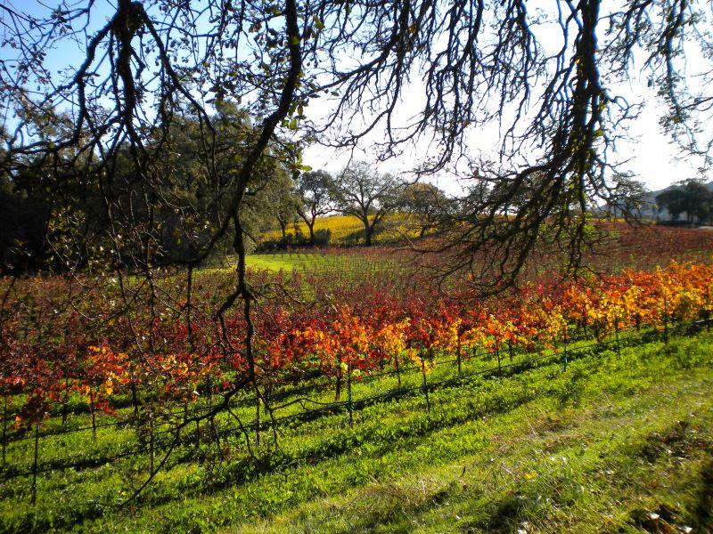 Napa Valley wine tasting hiking holiday in California, USA