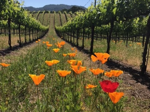 Wine Country Trekking