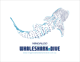 Ningaloo Whaleshark n Dive