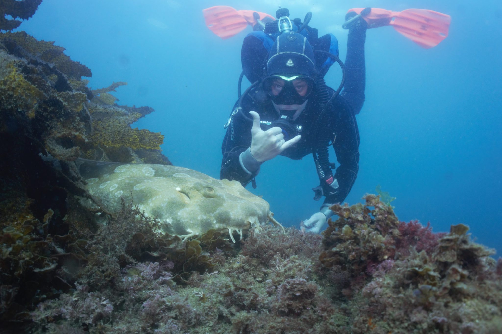Learn to scuba dive in Manly: PADI Open Water Course in Sydney