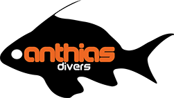 Anthias Divers