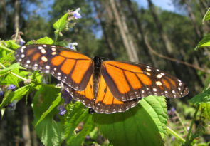 Culture & monarch butterfly tour: Mexico multi activity holiday