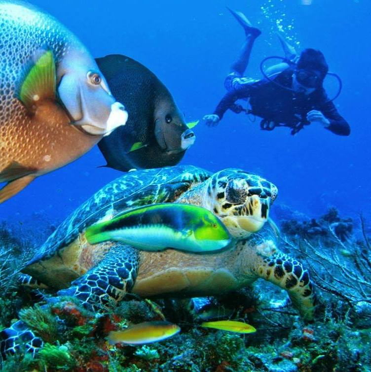 **NOW an EXPERIENCE** 2 x Tank Scuba Dive in Cozumel: Scuba Diving in Mexico